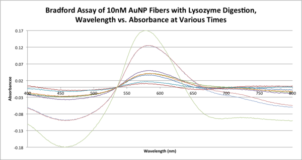 Bradford Assay of 10nM AuNP Fibers with Lysozyme Digestion, Wavelength vs. Absorbance at Various Times .png