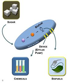 Efflux Pumps provide a direct mechanism to alleviate product toxicity (Image prepared by Everett Kaplan (JBEI))