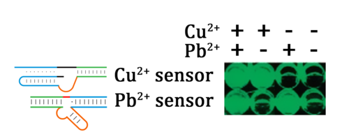 Figure 4. The selectivity of 8-17 DNAzyme and Cu2+ dependent DNAzyme to different ions. (From Liu J, et al., J. Am. Chem. Soc., 2007(129): 9838-9839.)