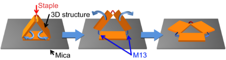 Figure 6. Model of 3D structure adsorbed on mica