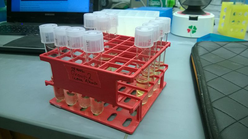File:4 8 14 Colony Isolation.jpg