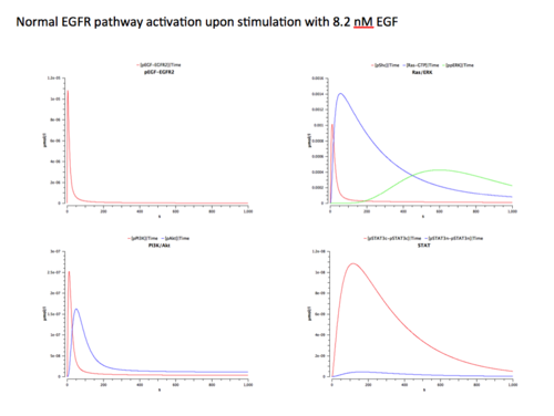 Figure 6: Simulation of the EGFR signaling pathway in response to 8.2 nM EGF in normal cells. This is a screenshot of Shannon's Powerpoint file