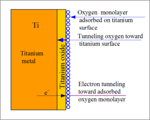 Figure 1 This figure shows how the oxide layer prevents the titanium from corroding.[1]