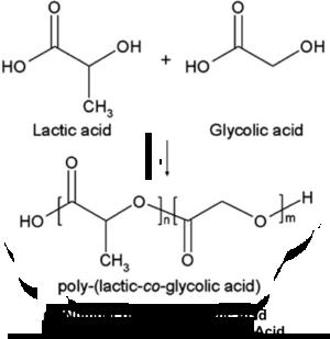 PLGA Structure