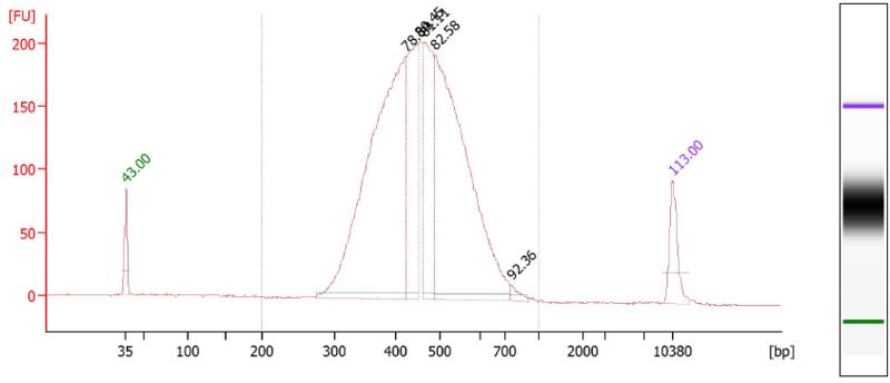 File:YP2 bioanalyzer.PNG