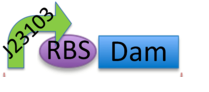 File:DamBB.jpg