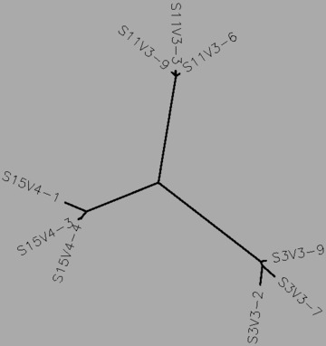 Figure 222: The midvisit tree for subjects 3, 11, and 15 (the rapid progressors), generated by CLUSTALW.