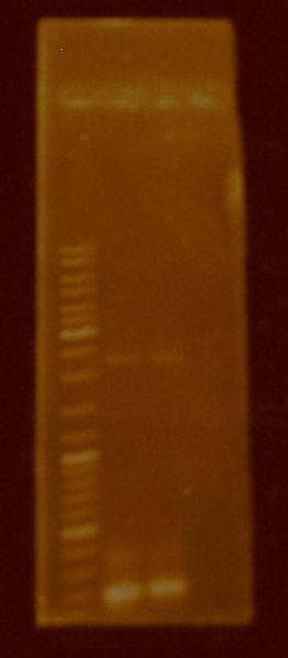 File:PCR.BB0015.JPG
