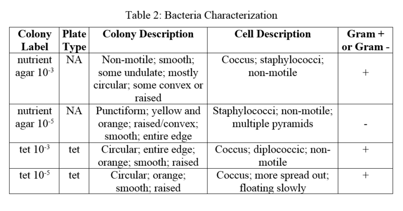 File:Bacteriaaa.png