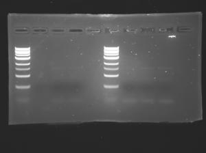 S15-M1D4 .jpg