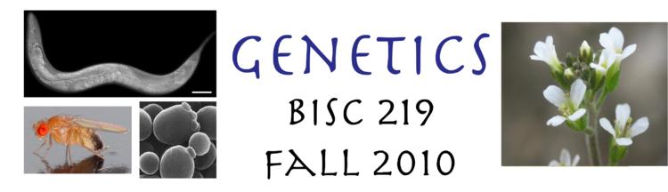 Genetics 219 Banner 2010.png