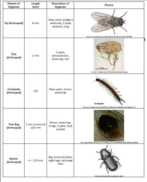 File:Lab 5 Table 2.jpg
