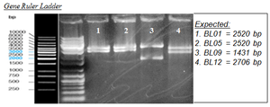 Plates 3 3 2013.jpg