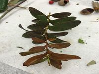 Picture of 1. plant with oval shaped leaves