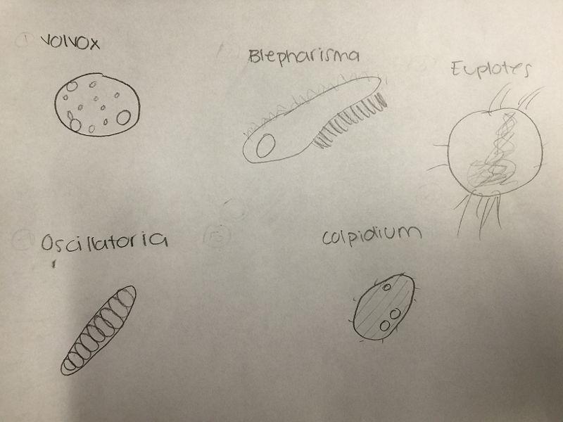 File:Lynda Arostegui organism found lab 2.JPG