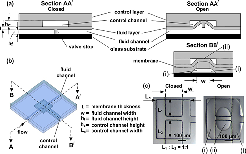 Figure 7: This illustration shows a PDMS bi-layer microfluidic device containing an actuate-to-open valve. (a) A cross-sectional view of the valve closed, blocking flow through the fluid layer channel. (b) Two cross-sectional views of the valve actuated through applying negative pressure/vacuum in the control channel. (c) A top-down view of the valve actuating using microscopic brightfield images.