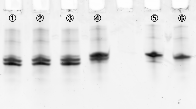 File:Electrophoresis leg cut sybergold.bmp