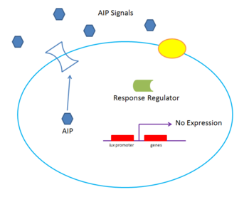 Gram positive quorum sensing system at low density. Low concentrations of the small peptide autoinducer AIP causes inefficient binding of a surface receptor. No expression is seen.