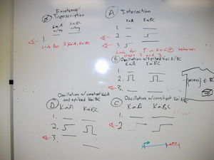 Cyano e coli experimental design.JPG