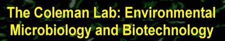 Lab-banner.jpg