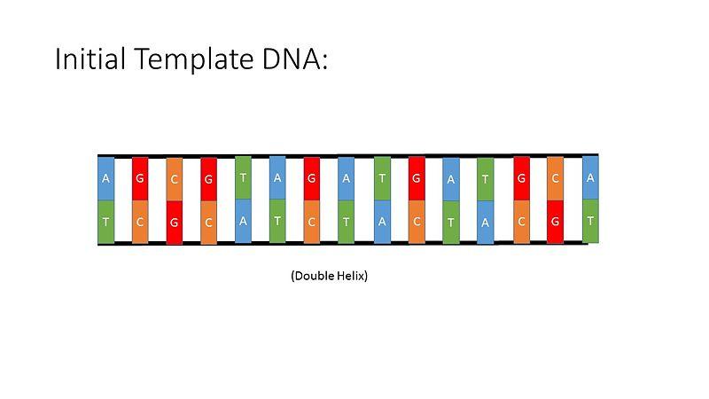 File:PCR Illustration 1.jpg
