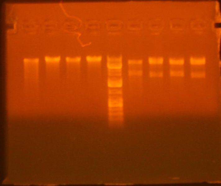 File:8-4 mgfp gatewayed.jpg