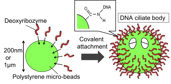 Figure.1:The pattern diagram of creating DNA ciliate