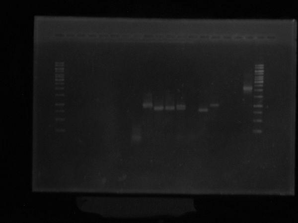 PCR Pfx.JPG