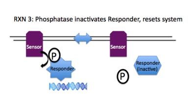 Rxn3 Phosphatase.png