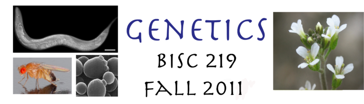 Genetics 219 Banner 2011.png