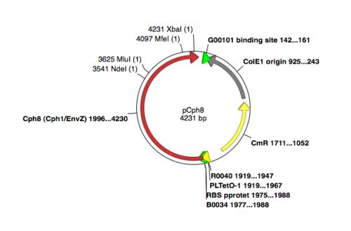 Cph8 unmodifiedplasmid.png