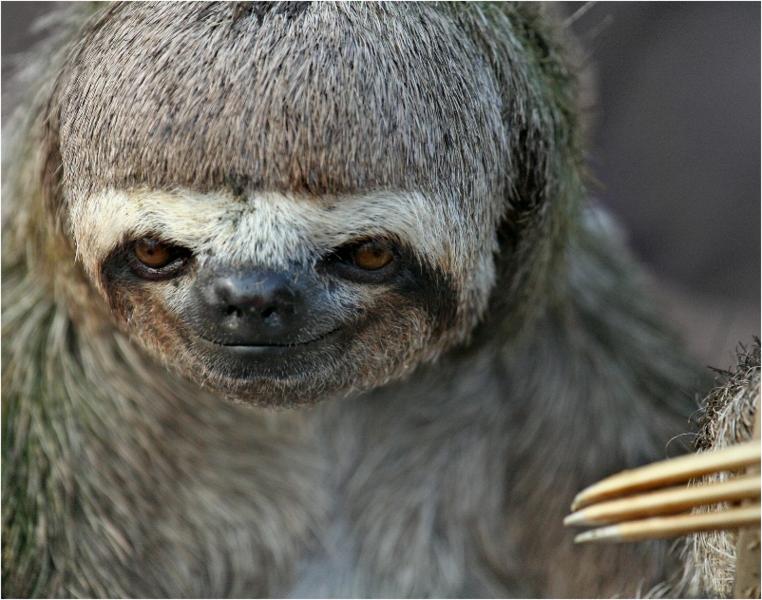File:Sloths.png
