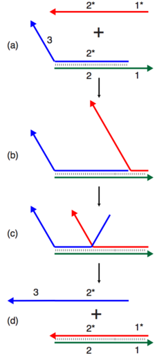A toehold-mediated strand displacement reaction. The red strand binds to the green strand, displacing and freeing the blue strand.