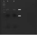 Thumbnail for version as of 12:15, 14 May 2015