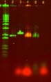 Thumbnail for version as of 15:37, 19 October 2013