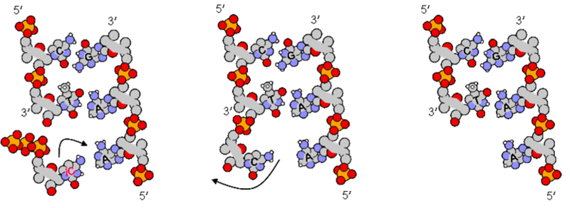 File:Icgems pfread.png