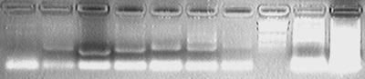 PKU 080514 ADH-PCR-check.tif