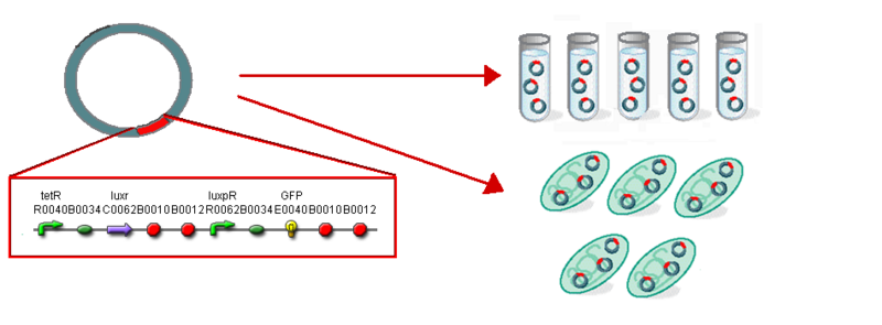 File:IC2007 BF stage1 construct.PNG