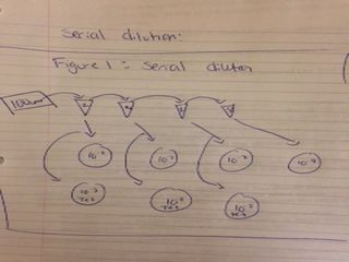 File:Serial dilution sketch.jpeg