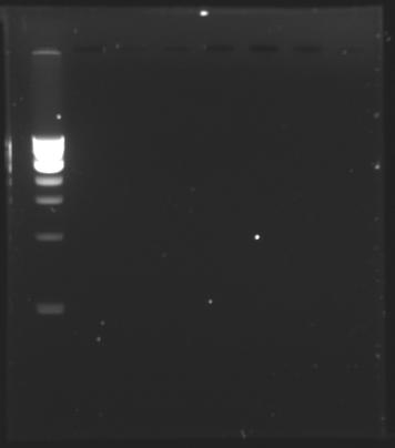 DNAcheck 150710.jpg