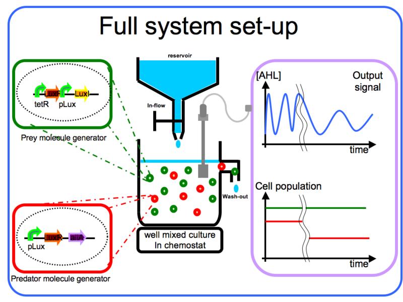 File:IGEM IMPERIAL FullSystem SetUp.png