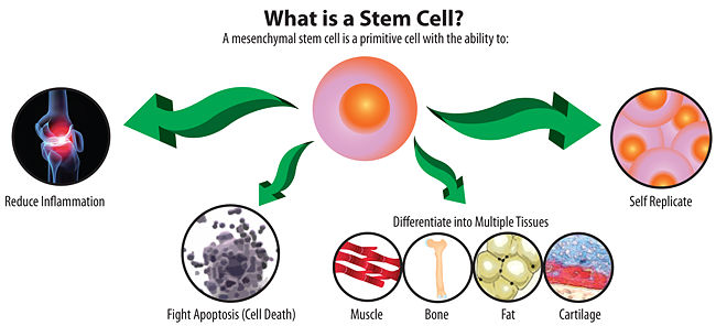Treating Spinal Cord Injuries with Stem Cells, by Lauren