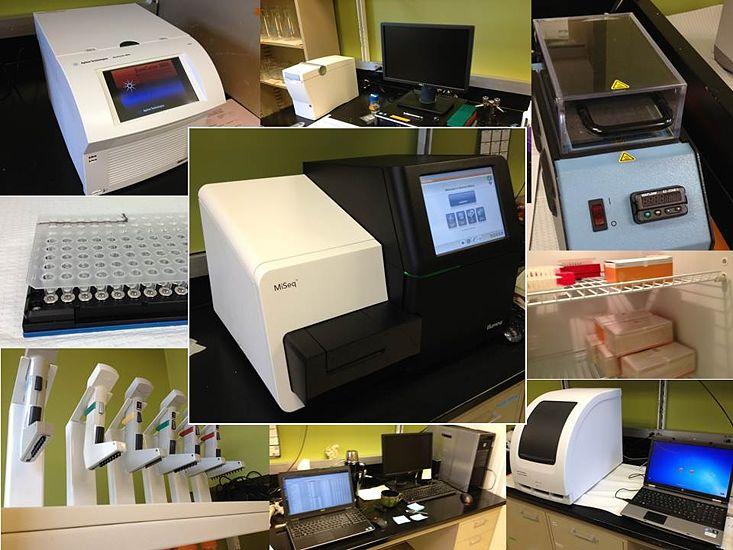 UMSL genomics cover.jpg