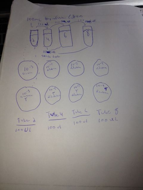 Serial Dilutions.jpg