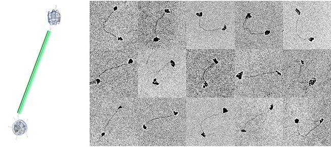 Final nanodiamond 6HB arrangement: Model and TEM images (Scaling: 100nm)