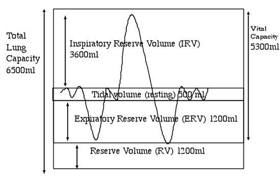 Lab 8: Vertebrate Circulation and Respiration - OpenWetWare