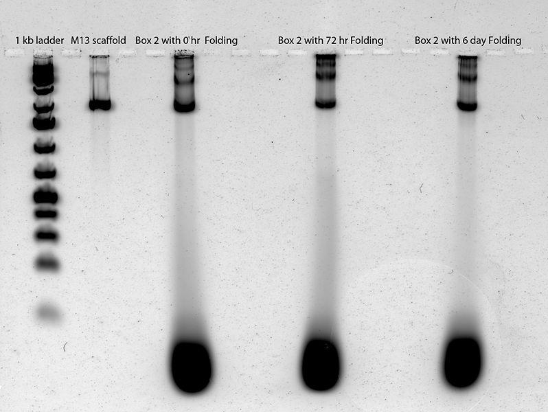 File:2011-07-12 gel scan 2.jpg