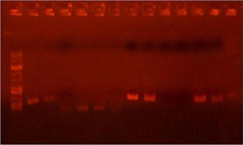 Analytical gel 6 22 2.jpg