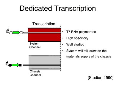 Implementing Dedicated Transcription