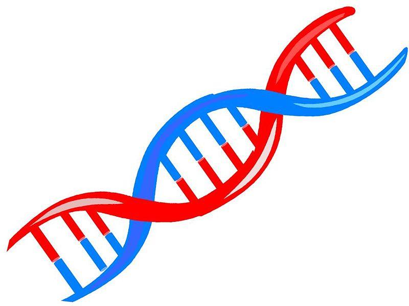 File:Why DNA.jpg